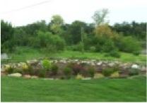 Grove Rain Garden