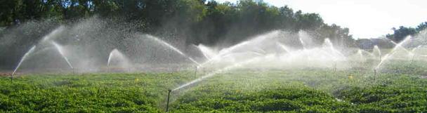 irrigated_peanuts.jpg